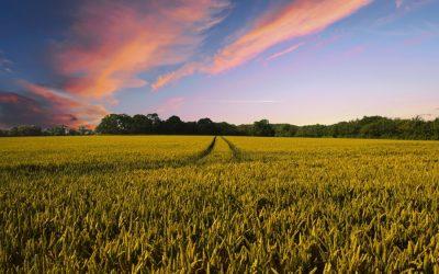 Nem elég zöld a Közös Agrárpolitika