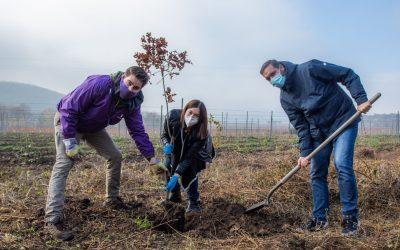 Hogyan ültess fát? – A Momentum faültetési kisokosa